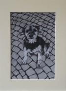 Cobblestones & Dog