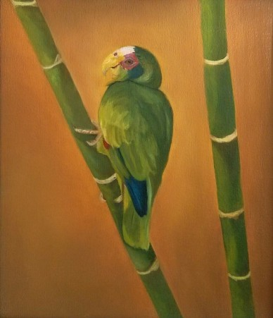 Parrot and Bamboo